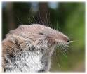 The whiskers are pointing upwards..